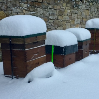Hives in winter covered in snow